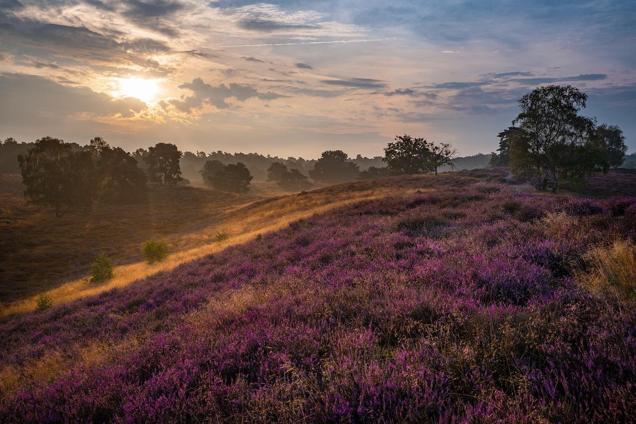 sunrise, field, meadow
